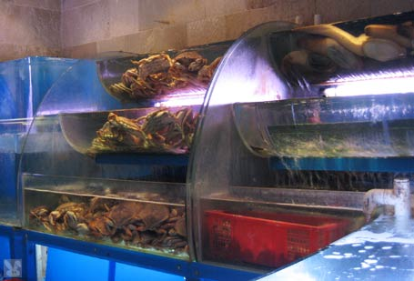 Fish crudo with white gazpacho